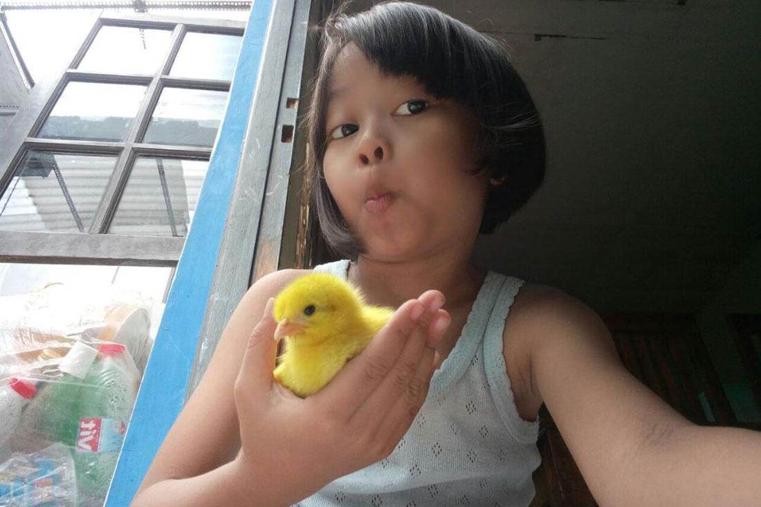 国外政府为减少儿童低头族,用养小鸡方式代替手机,效果令人意外