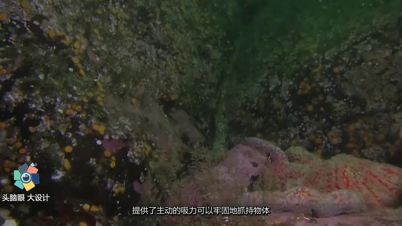 科学家声称如果在章鱼身体上安装人工智能系统将威胁人类