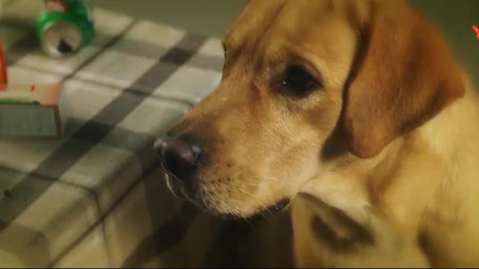 他是一只狗:阿慧让男孩滚,还说他是个骗子!