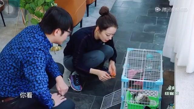 小兔子太能吃吉娜担心会长胖,郎朗被兔子萌化请求多喂点