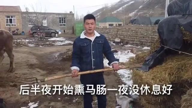 新疆牧民储备冬肉,刚出熏房的野红花熏马肠,这么多能吃多久?