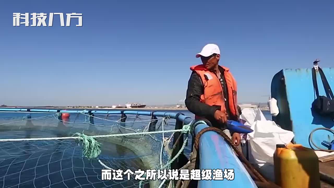 中国制造全球最大超级渔场一年产鱼150万条美日重金求购