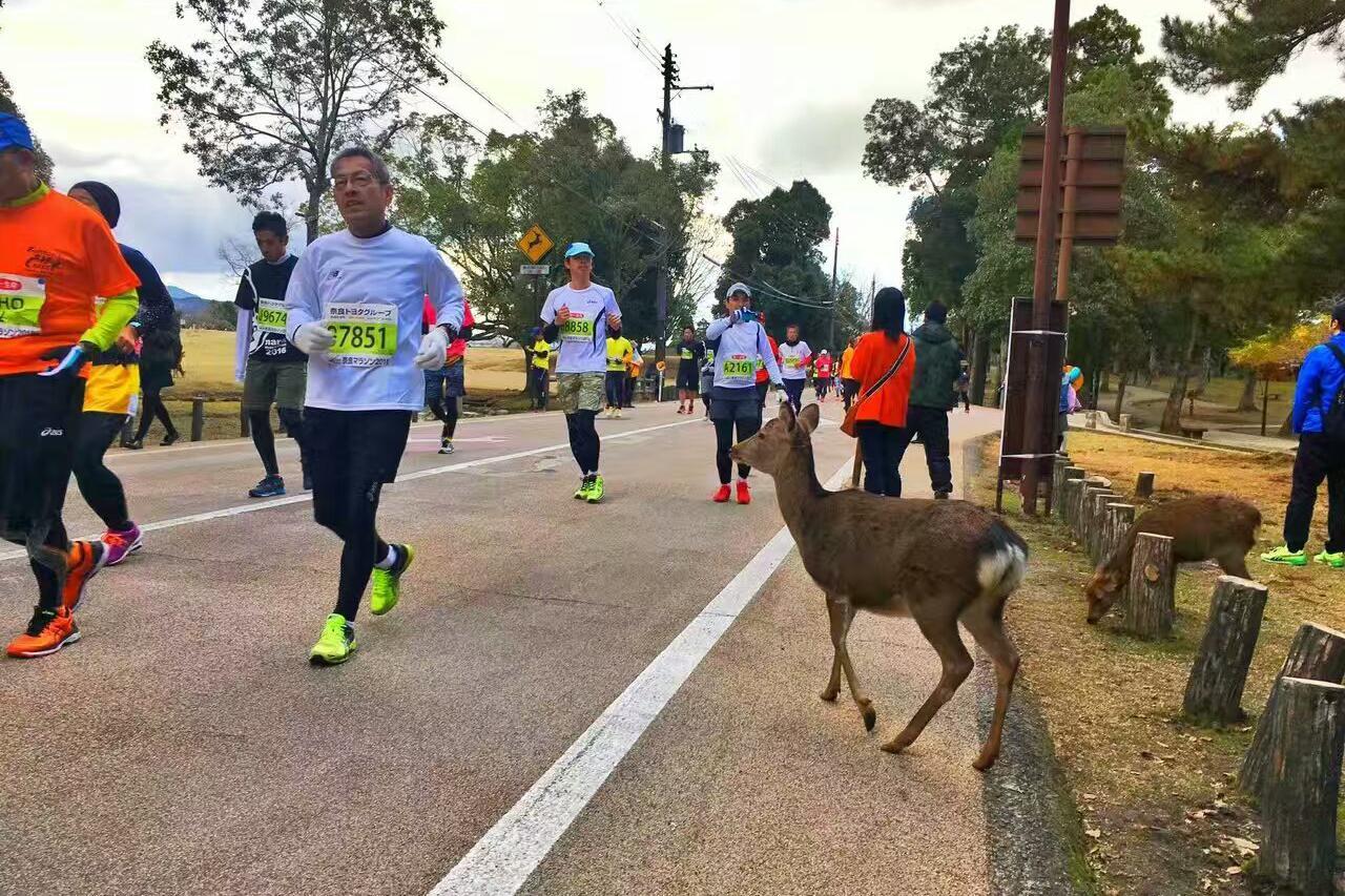 【日本奈良马拉松】感受日本古文化,亲密接触奈良的鹿!