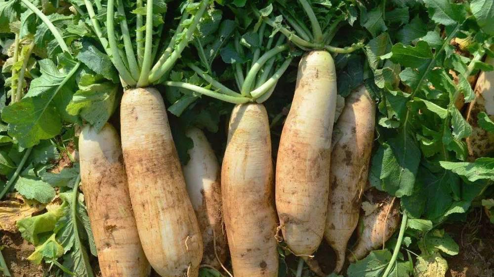 买胡萝卜时,注意3种萝卜,不要买也不要吃