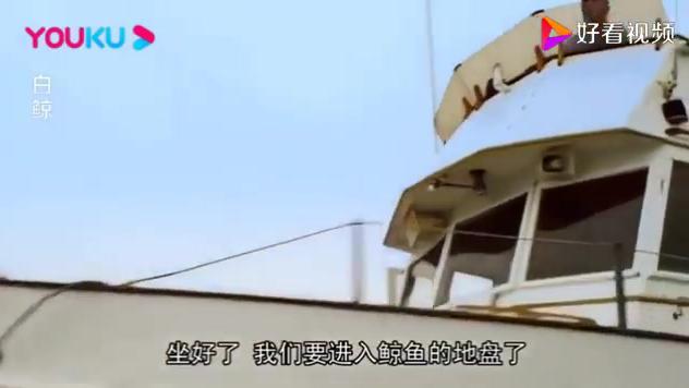 船长开船20多年,从未见到这么大的鲸鱼,谁知下秒就被巨物吃了