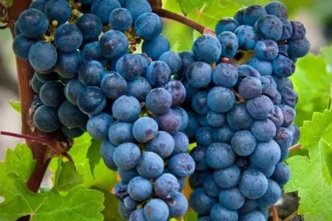 法国波尔多:公认的葡萄酒圈扛把子,为什么我会劝你不要买