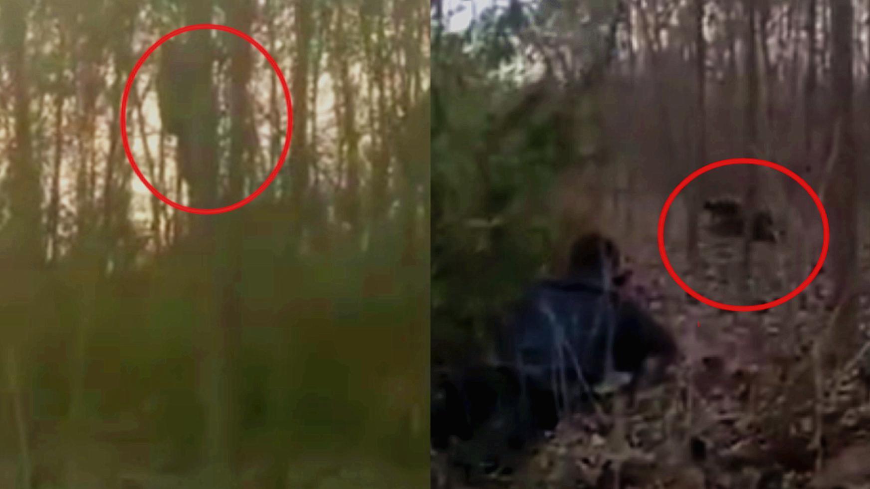 三枪击毙疯牛!实拍:男子被疯牛逼上树3小时 武警到场将牛击毙