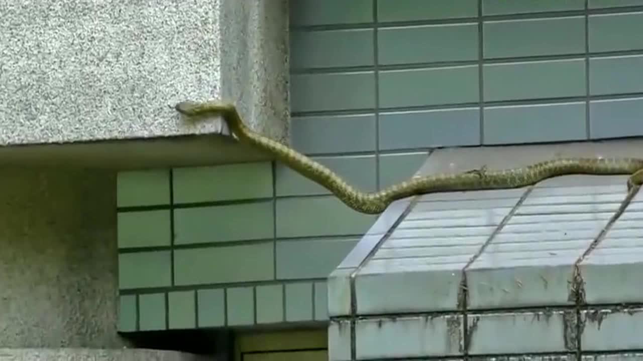 蛇的爬行能力竟然这么强,长见识了