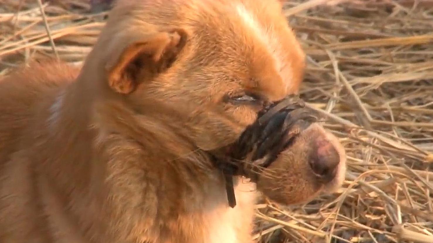 狗狗被人绑住嘴巴不能进食,解开胶布的那一刻,让人泪奔
