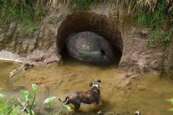 """阿根廷男子河边钓鱼发现一""""石头蛋"""",外表坚硬且满身鳞片"""