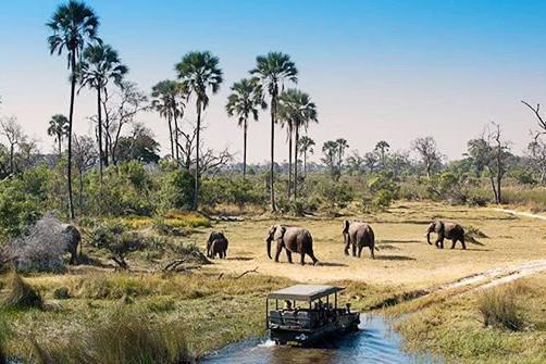 非洲最野性的国家:当地人禁止捕猎食草动物,保持原始生态景象