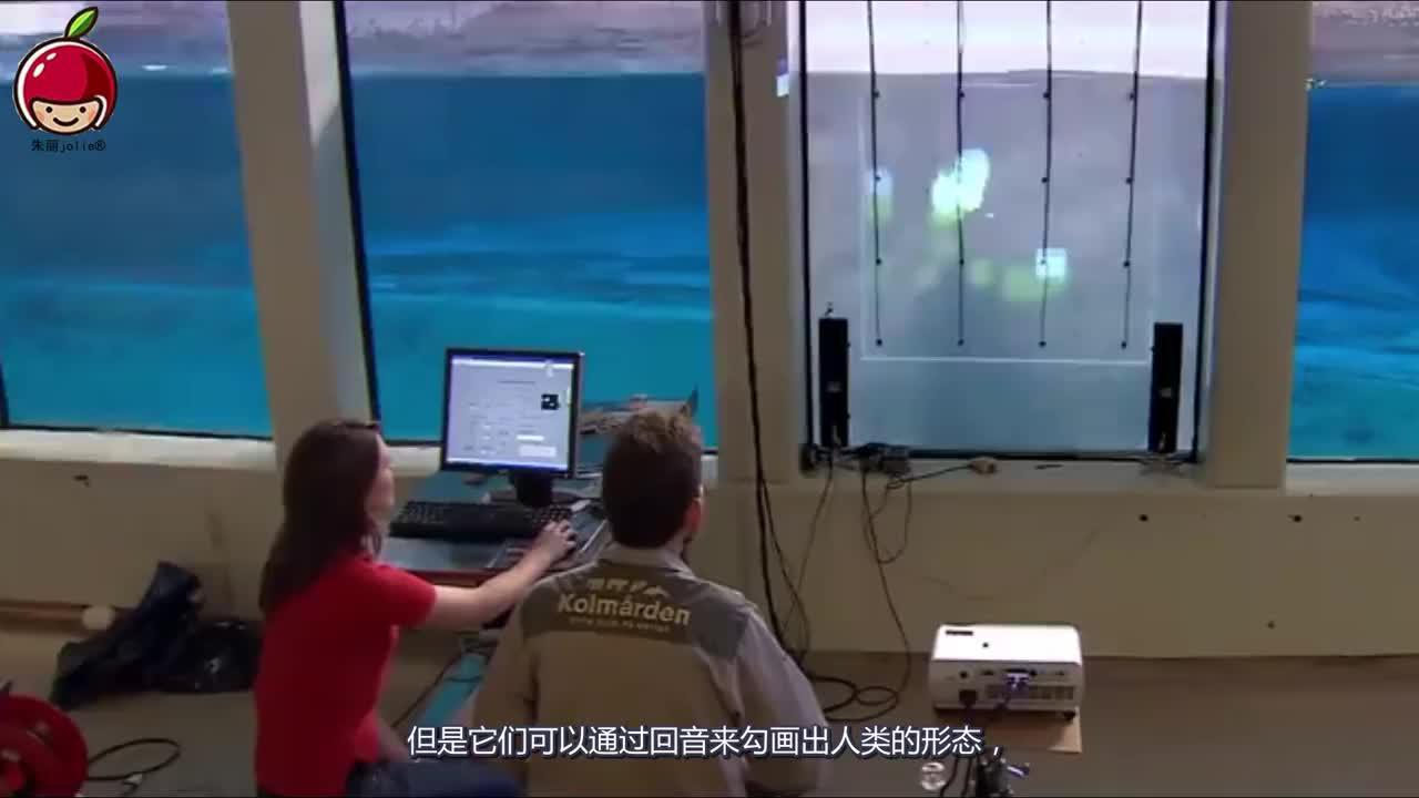 海豚为什么这么喜欢亲近人类原来人类在它们眼里是长这样的
