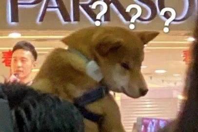 刘昊然粉丝举狗吸引眼球,明星与粉丝有趣互动你知道有哪些?