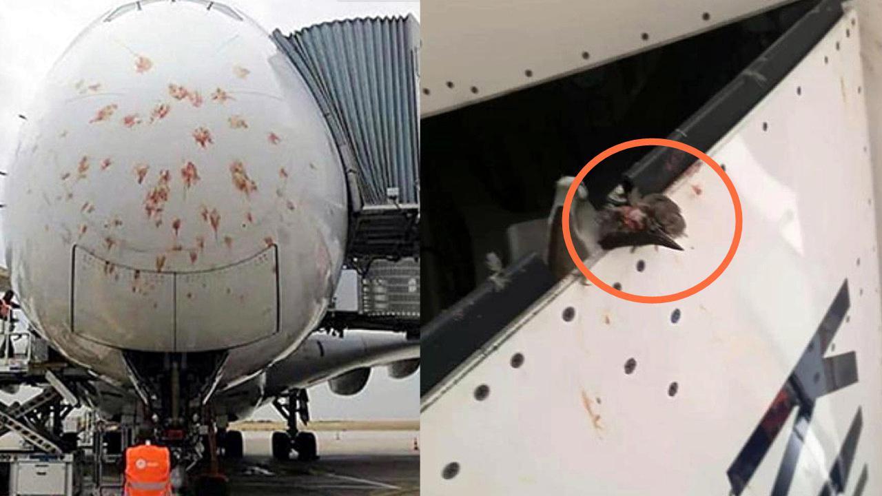 现场画面!客机法国降落时撞上鸟群 机头血迹斑斑机身挂着残骸