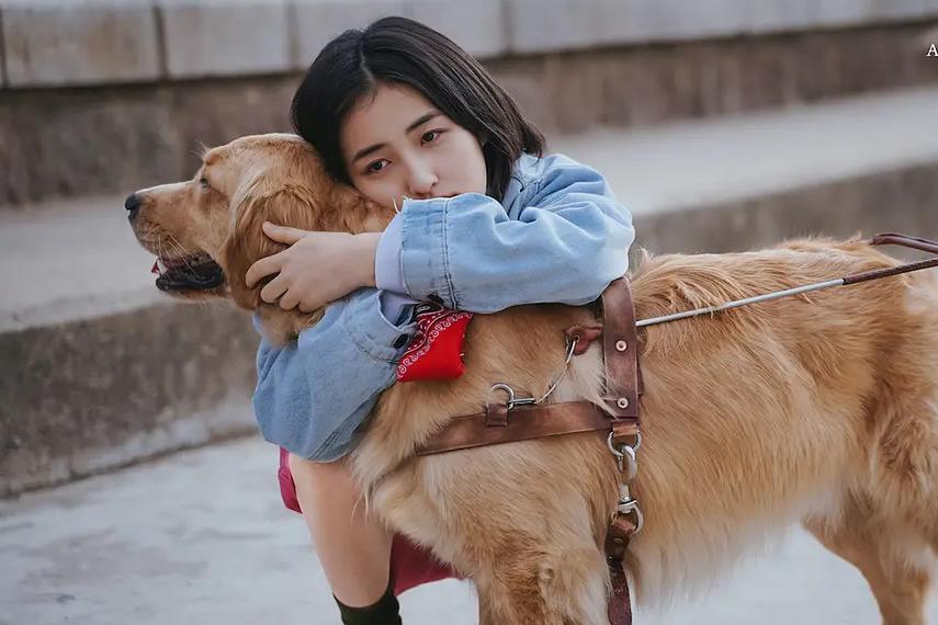 12天收5.6亿,《宠爱》评分票房不成正比,徐峥关上宠物电影大门