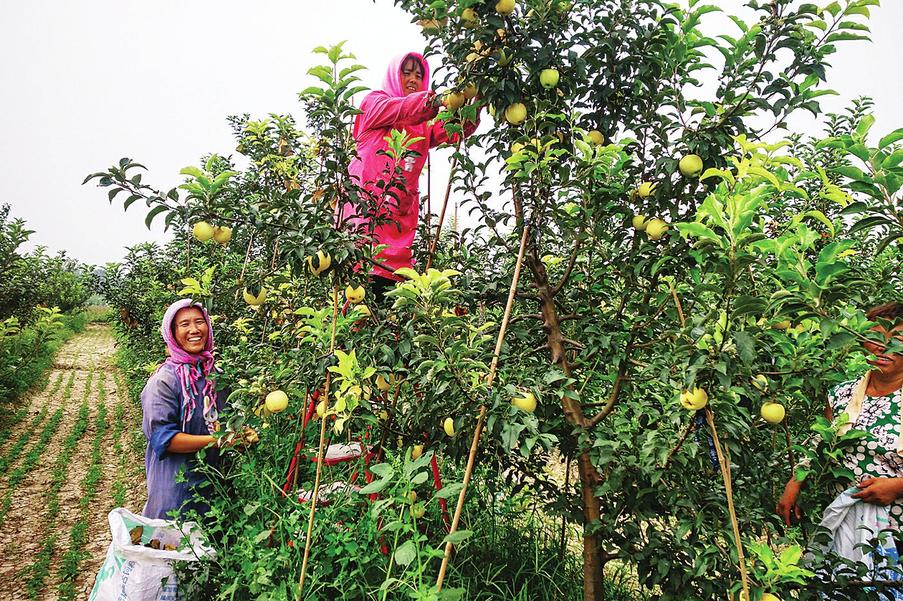 赋能农业数字经济,济南先行区助力农村提速换挡