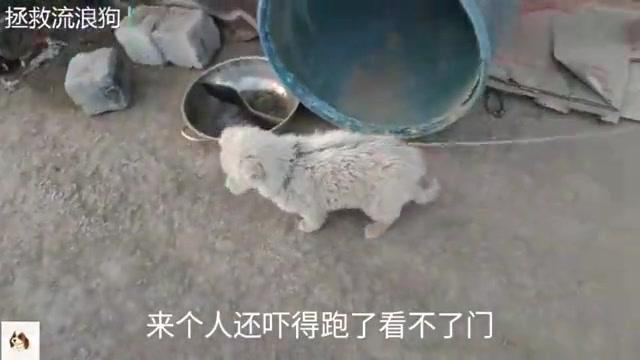 路边捡了一只流浪狗让看家,却因太小被主人打骂,还吃不饱