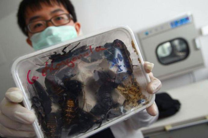 警方查获大量透明塑料盒,查清里面的东西立刻进行杀毒销毁