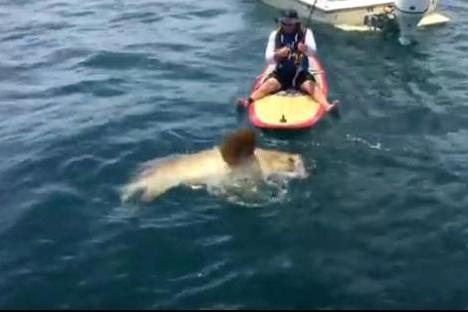 男子独自在海上钓鱼,却意外捕获到这东西让所有人无比兴奋