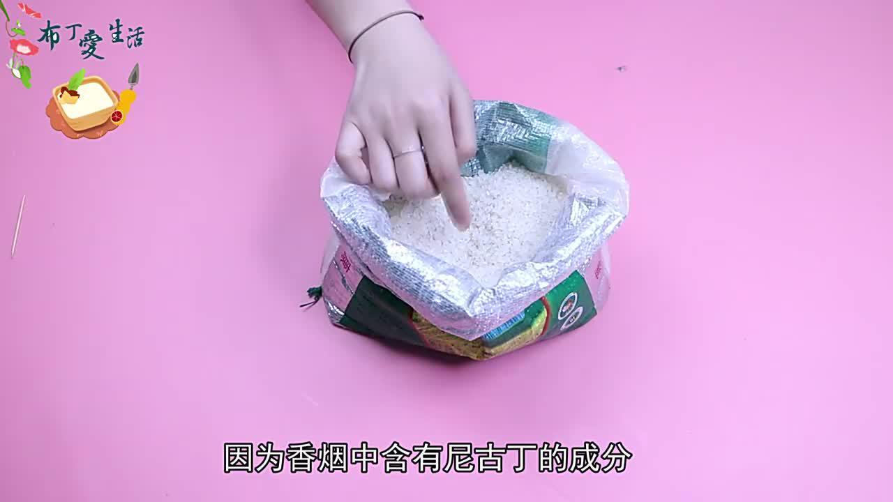 原来米虫怕它们米袋里放一个大米放1年不发霉不长虫真棒