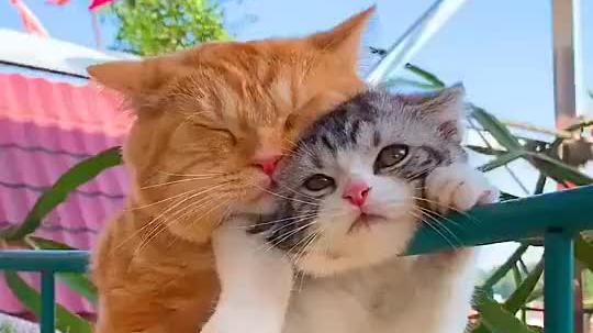 你们两只小猫咪也太可爱了吧,喵星人的萌宠暖心都在你们这了