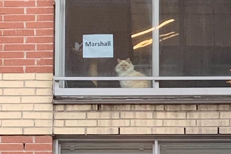 每天望见对面的猫咪太可爱,她用条纸问猫的名字,获得暖心回应!