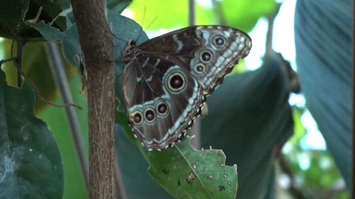 毛毛虫会变成蝴蝶是因为什么?难道它是蝴蝶的寄存体?问题深奥!