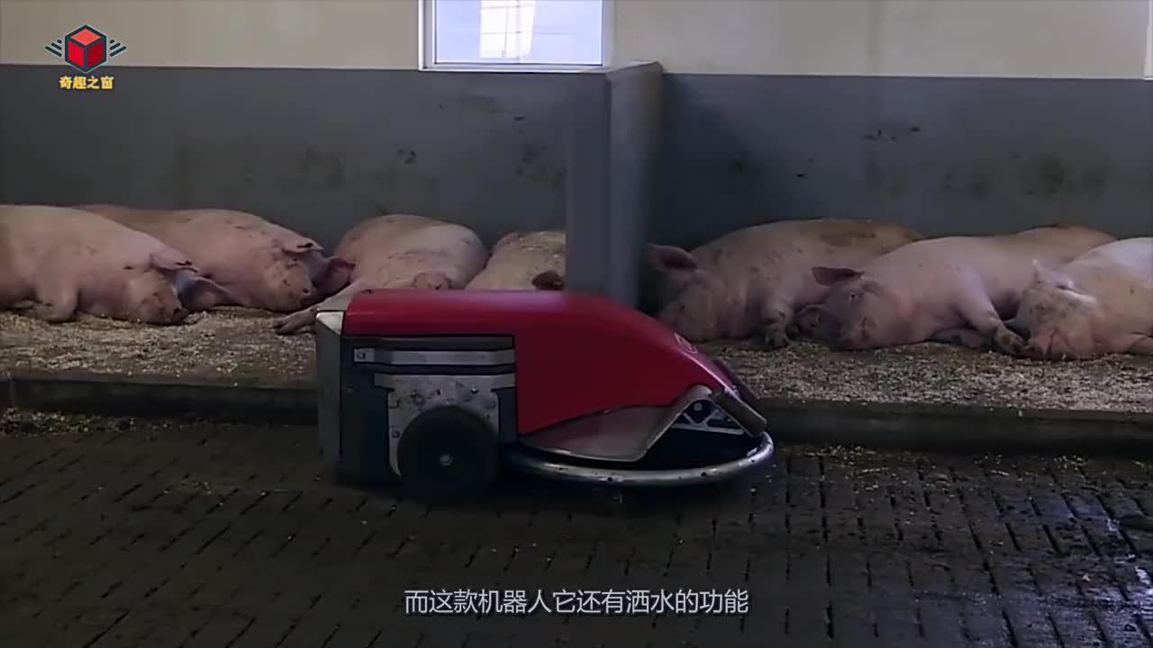国外超大号扫地机器人专门用来清理猪粪老外养猪真有一套