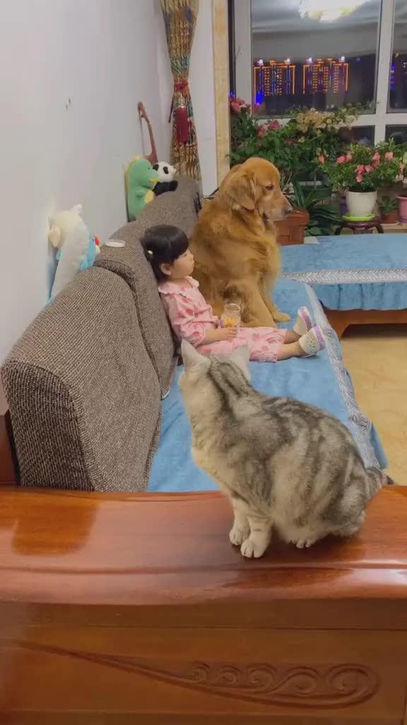 小棉袄一出现这一猫一狗就成了这个样这待遇老娘都享受不了