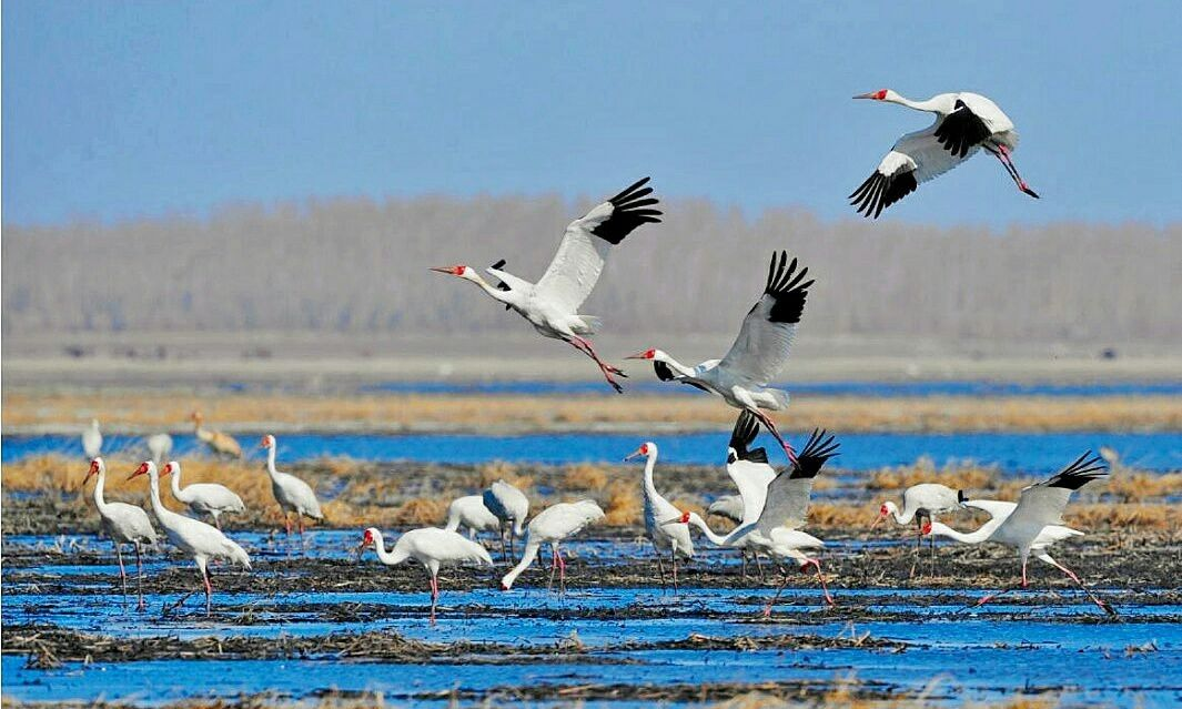 吉林省 白城市 镇赉县 莫莫格国家级自然保护区 金秋