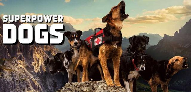 美国队长献声,拍纪录片记录英雄狗狗的生活,看它们用超能力救人