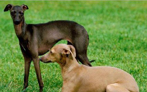 淘气的小狗狗,每天生机勃勃,被它可爱到了