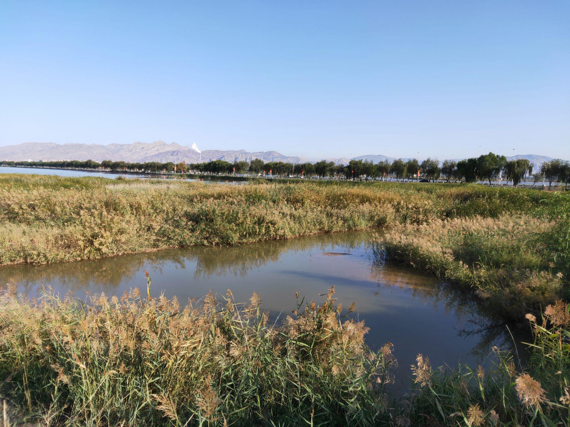 宁夏回族自治区 石嘴山市 星海湖 秋色