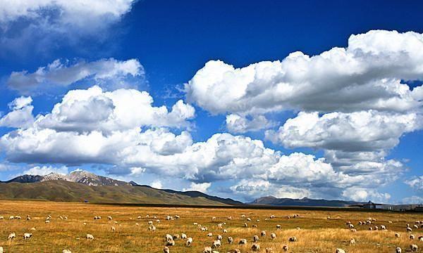 到若尔盖去,到水光一线的草原上去,到豪迈无疆的草原上去