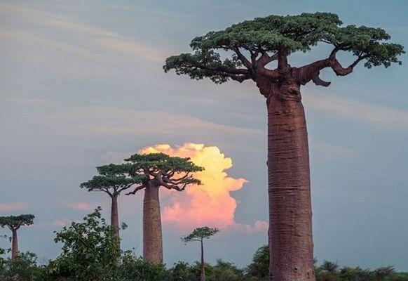 来到不归城马达加斯加,你会看到各种没见过的独特景观!