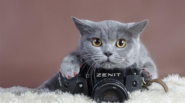 养猫须知给公猫做绝育,这几点是必须注意的!