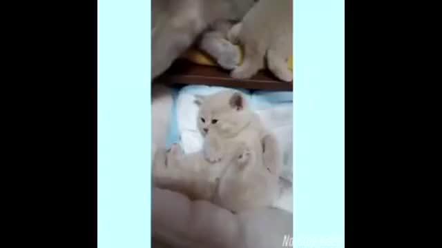小奶猫刚叫唤了一声就被猫妈妈捂住了嘴别吵安静点