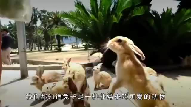 世界上最大的兔子一年光伙食费就要2万多元这是土豪的宠物