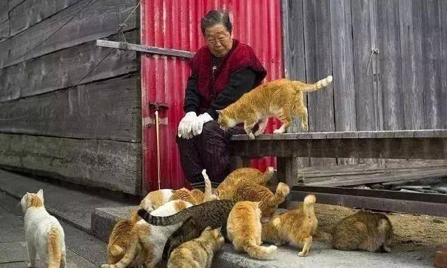 """日本著名景点""""猫岛""""疑遭人恶意投毒,岛上猫咪集体中毒死亡"""