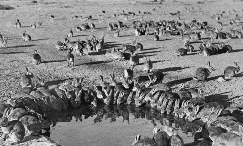 入侵物种中最丢人的几个物种,千里迢迢来中国,却被吃干净了