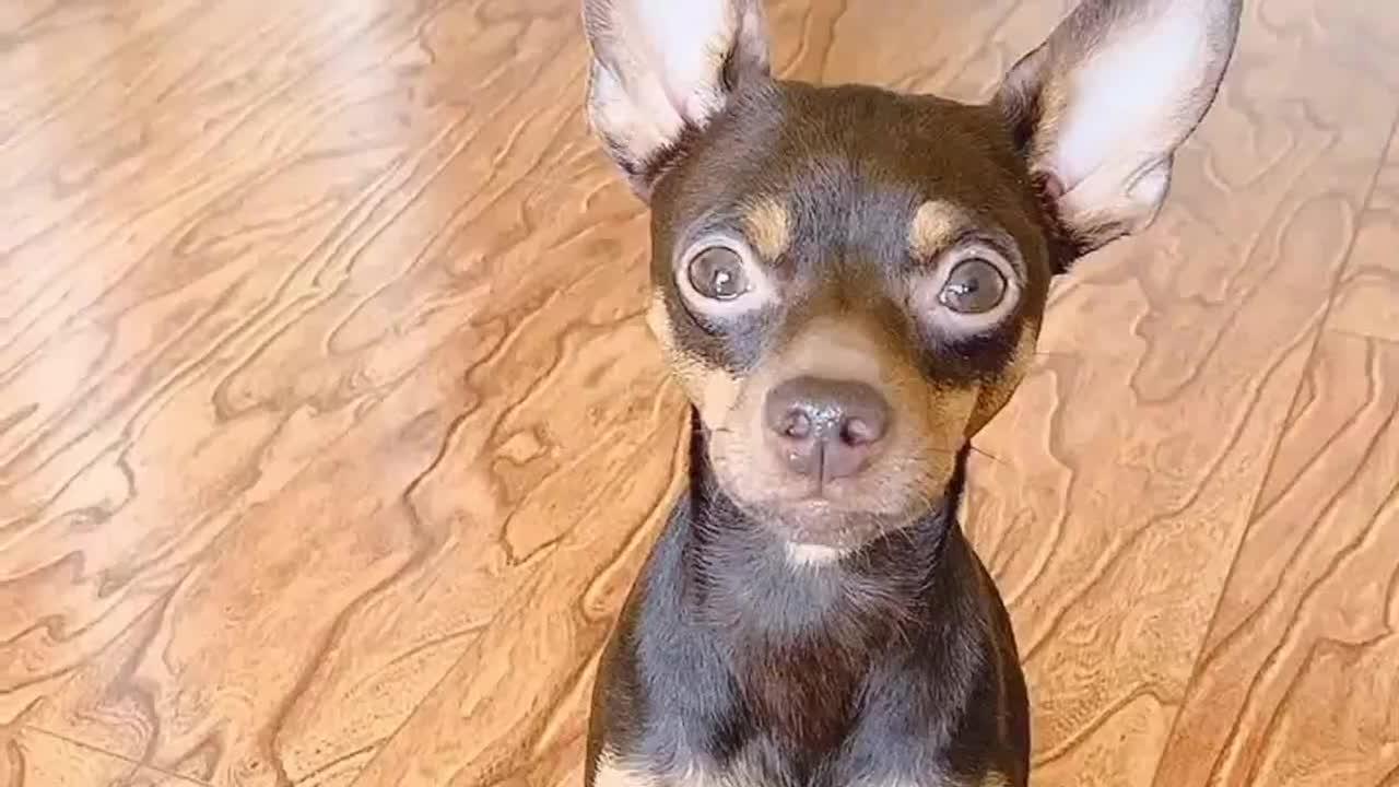 成精的狗狗都是别人家的,网友:快开学了,别耽误孩子上清华