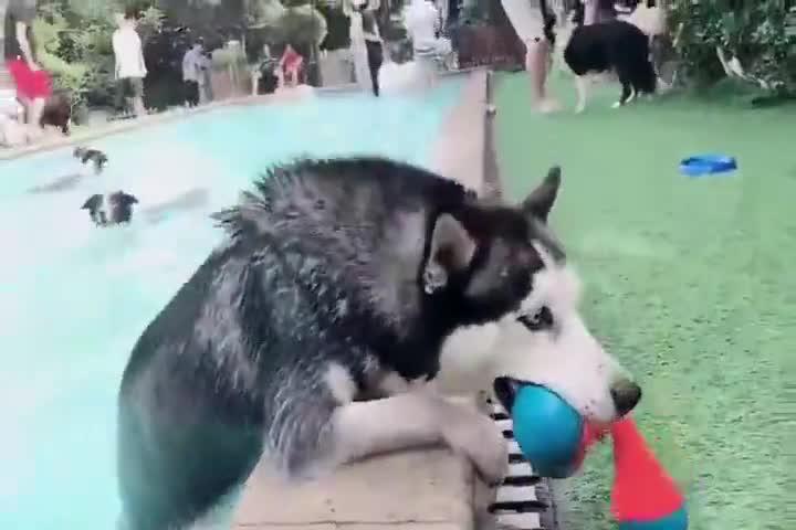 狗狗游泳馆,不得不说城里人真会玩!