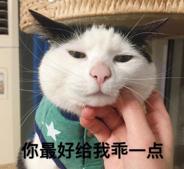 公猫绝育后,面对母猫完全没反应,这冷漠的表情,已是废猫了