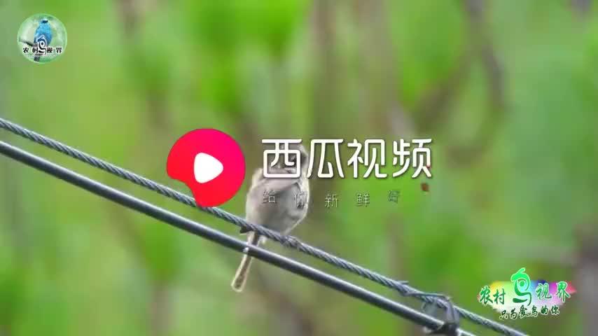 小哥拍到两只不知名的野鸟,你说是一公一母吗?