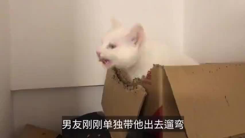 猫咪也有焦虑症狂啃纸箱泄不满主人你是魔鬼吗