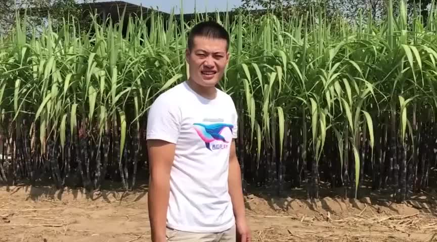 小龙把自家种的甘蔗寄给粉丝朋友感谢大家支持甜甜蜜蜜过中秋