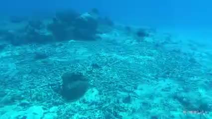 炮哥自制塞班海底世界我是一只鱼