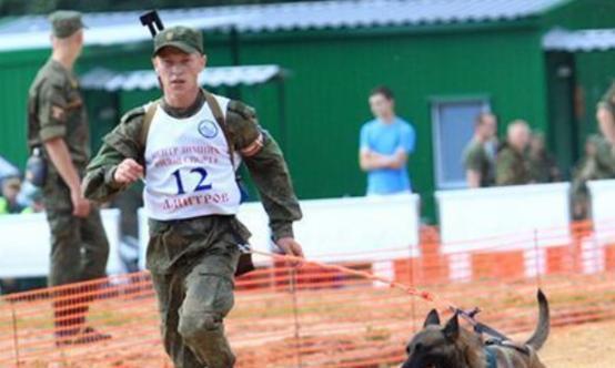 军犬退役后,国家是怎么对待它们的?中国的做法值得网友点赞!