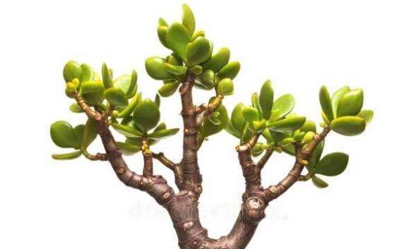 动物小时候最萌了,植物界也有萌物,掌心上的盆栽:好小巧,可爱