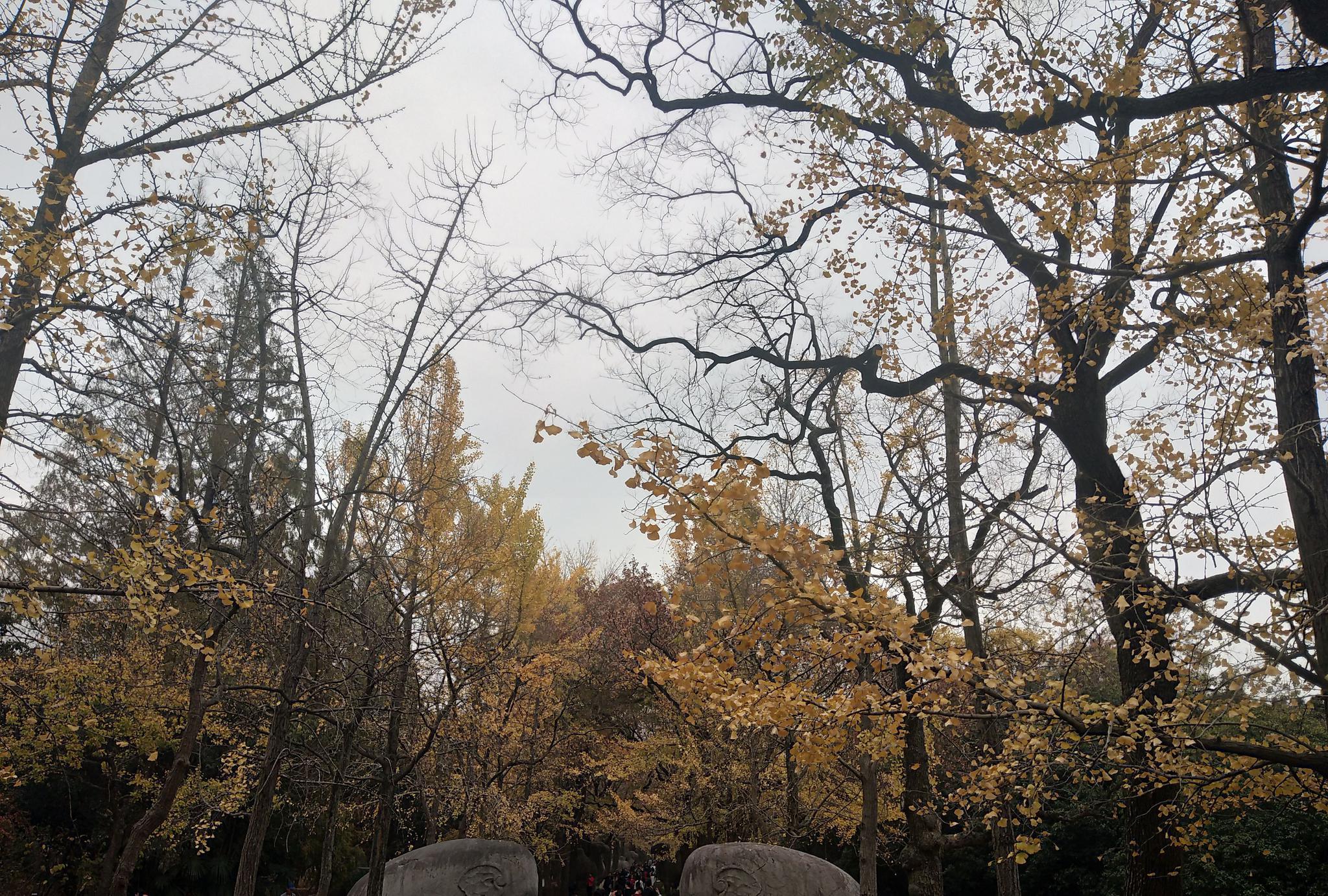 南京赏秋之韵美,这处景点不可不去